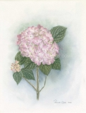 Pink-Blush